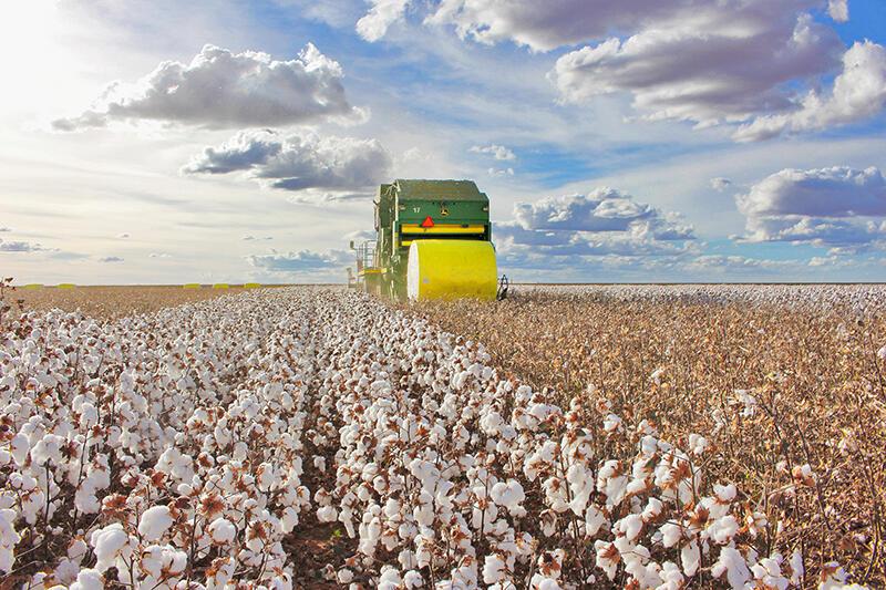 Colheita-algodão-Fazenda-_Divulgação-Abapa