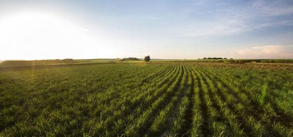 Bioenergia pode ajudar na mitigação das mudanças climáticas