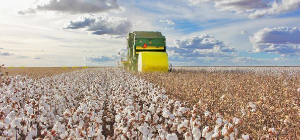 Tecnologia e manejo no desenvolvimento do algodão