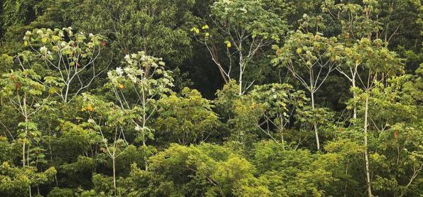 A Amazônia é realmente o pulmão do mundo?