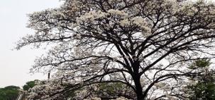 São Paulo tem início de primavera mais frio desde 2002