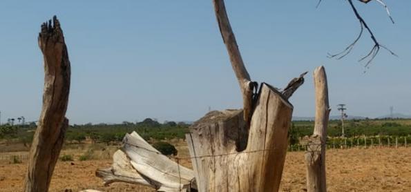 Nordeste em alerta para o ar muito seco nesta quinta