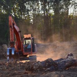 Desmatamento entre principais causas de surtos de doenças