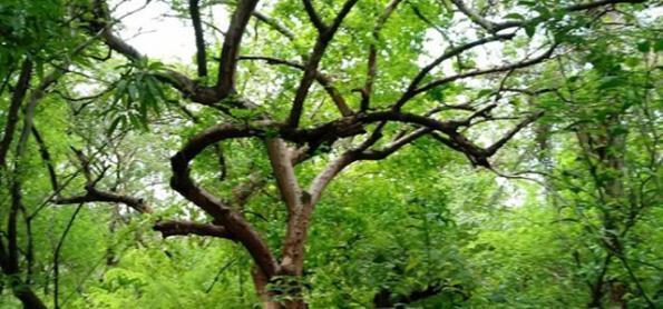 Piauí dedica 31,1% do seu território à vegetação nativa
