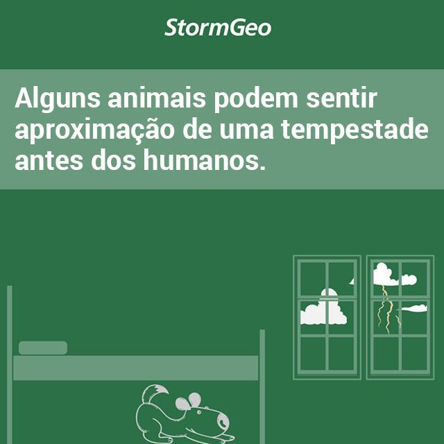 Animais-post