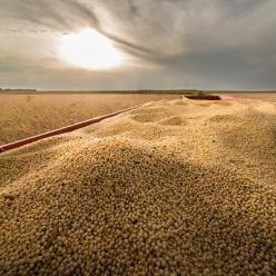Chuva impacta na colheita da soja no Paraná