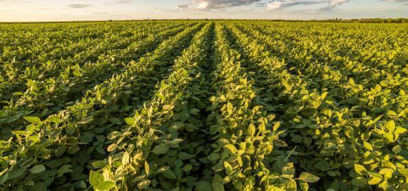 Safra 2019/20 de soja deverá ter uma área 2,3% maior