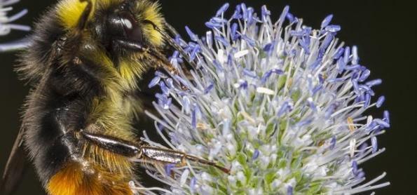 O alerta de cientistas contra o desaparecimento de insetos
