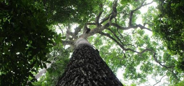 Cápsulas do tempo: como árvores podem ensinar a preservar