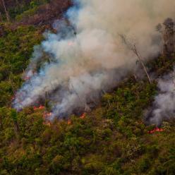 Pesquisadores alertam para contenção de queimadas na Amazônia