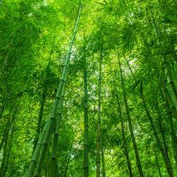 Webinar debate os oito anos do Código Florestal