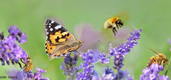 Biodiversidade: a peça mais importante para o futuro sustentável