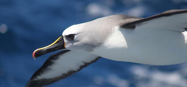 5 formas de contribuir para a conservação marinha