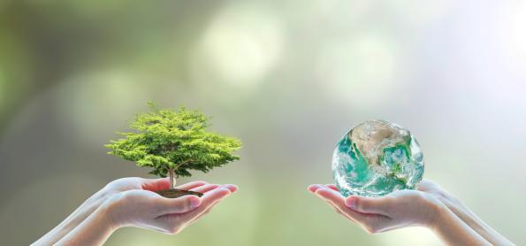 Workshop elabora proposta de estratégia global de biodiversidade
