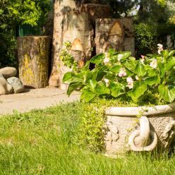 Conheça quatro dicas para o cuidado com as plantas no inverno