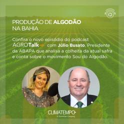 Produção do Algodão na Bahia é tema do podcast AgroTalk