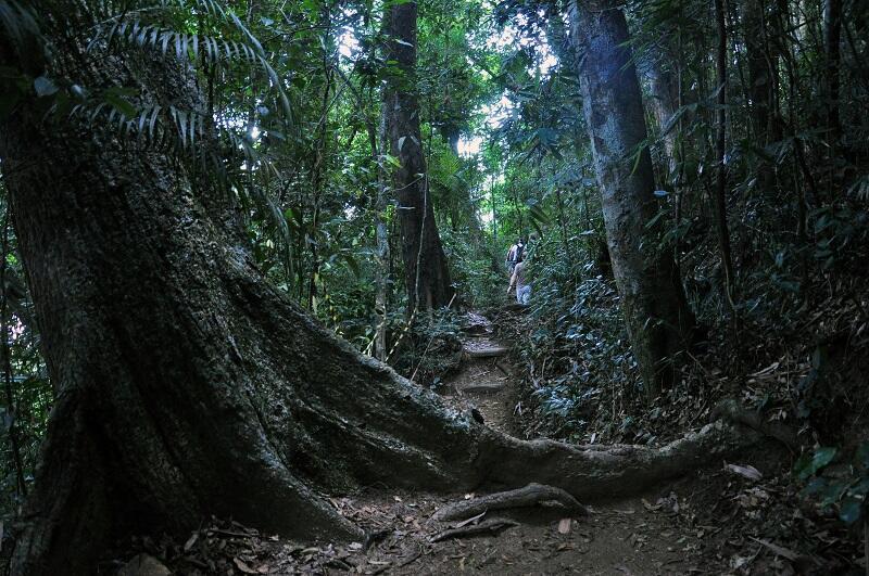 Parque-Nacional-Tijuca-Alexandre Macieira-Riotur-Fotos-Publicas