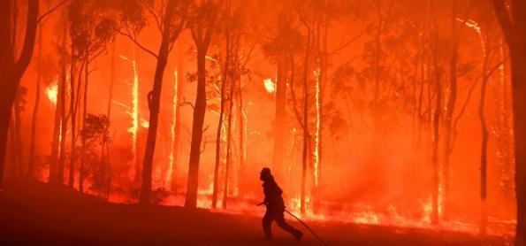 Incêndios na Austrália afetaram quase 3 bilhões de animais
