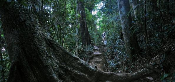 Funções sociais e econômicas das florestas