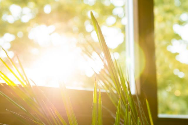 sol_plantas_2