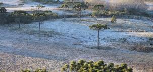 Serra Catarinense registra temperatura baixa e geada