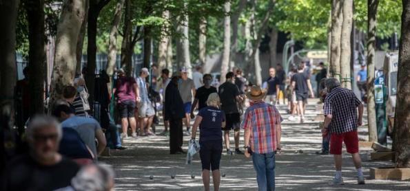 Por que cidades precisam mais do que nunca de árvores