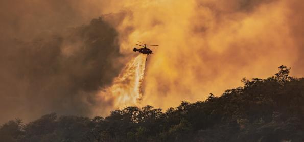 O que podemos fazer hoje para evitar mais perdas ambientais
