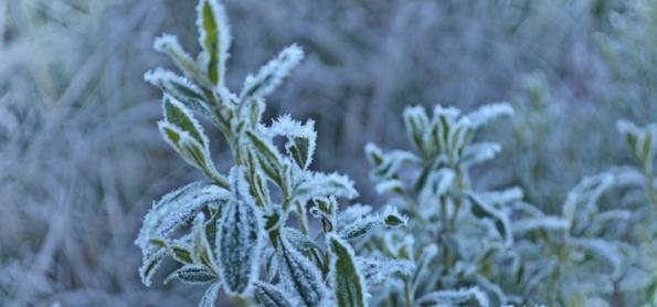 Últimos dias do inverno com frio intenso e geada no Sul
