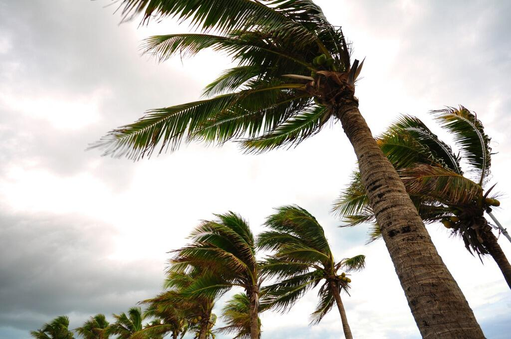 palm-tree-at-the-hurricane-picture-id496976306