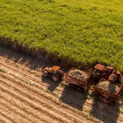 Fato ou fake: desmatamento gera riqueza para o Brasil