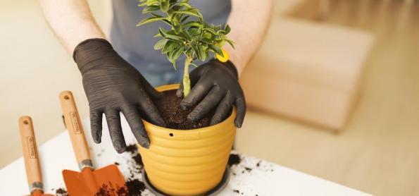 Ideias básicas para criar ambientes verdes dentro do lar