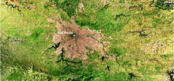 Instituto de Botânica irá estudar impacto do clima na vegetação