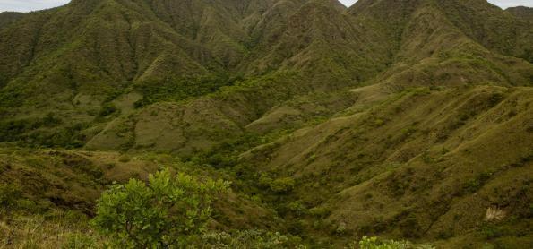 Pesquisa mapeia biodiversidade da fauna e flora do Cerrado