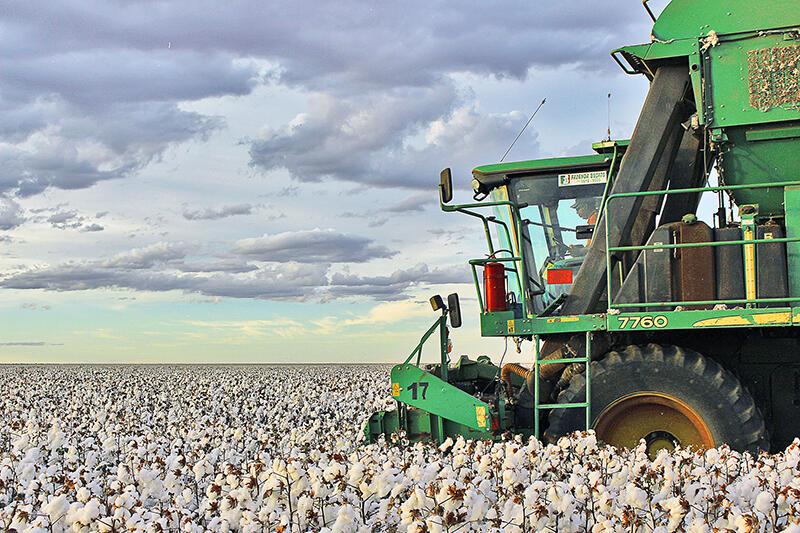 Início semeadura de algodão na Bahia