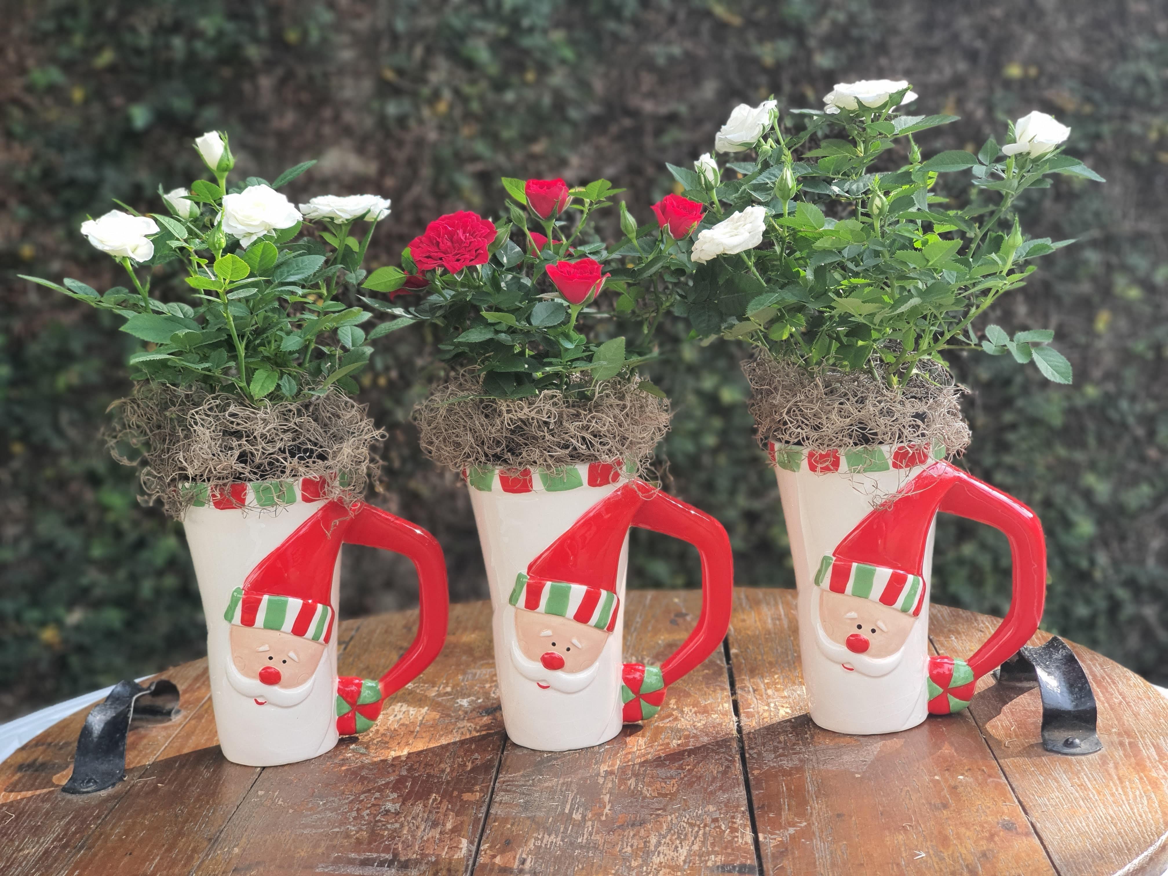 rosas-Isidorus-Flores--9-