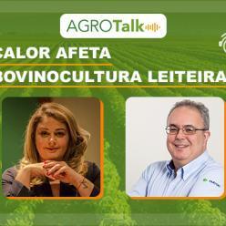 AgroTalk: Calor afeta bovinocultura leiteira