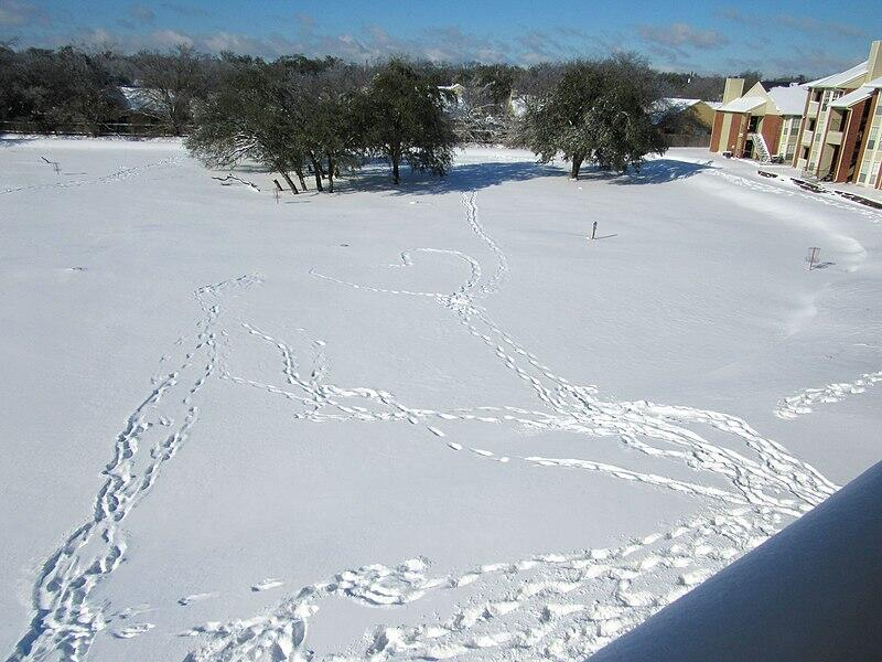 Winter_Storm_Uri_in_Austin,_Texas_15