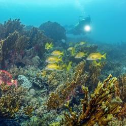 Brasil usa tecnologia pioneira para gerar corais de proveta