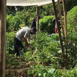Hortas comunitárias: saúde, segurança alimentar e renda