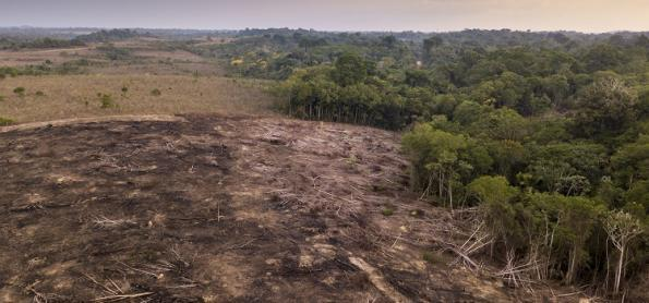 Cientistas: Amazônia pode estar chegando ao limite