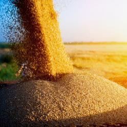 Produção de grãos tem previsão de aumento de 5,7%, diz Conab