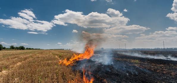 Focos de fogo no Brasil caem 29% na comparação anual