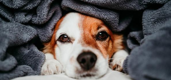 10 dicas de cuidados com os pets na estação mais fria do ano