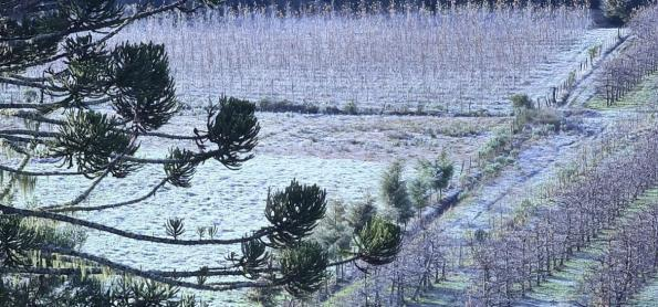 Geada negra pode atingir áreas do Paraná nos próximos dias