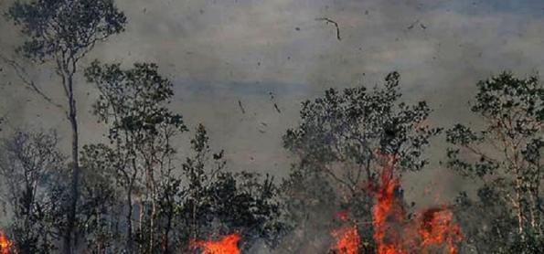 Como previsões mais pessimistas para Amazônia já se confirmam