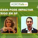 O impacto da geada no cultura do trigo é tema do Agrotalk