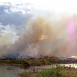 Onda de calor: produtor deve estar atento ao risco de queimadas