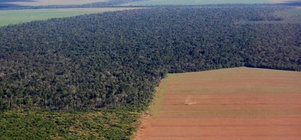 Processo de savanização da Amazônia já começou