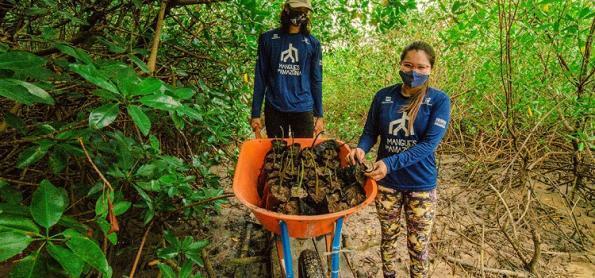 Viveiros ganham espaço nos mangues da Amazônia
