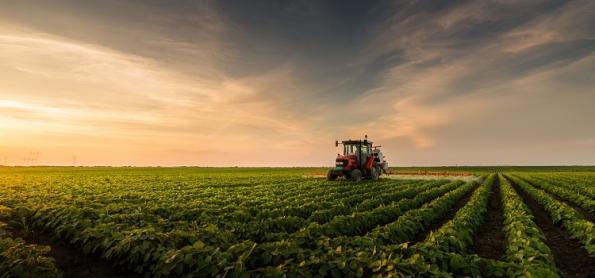 Calendários de semeadura de soja passam a ser obrigatórios